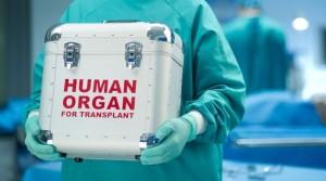 1481280923-8368-organyi-transplantatsiya